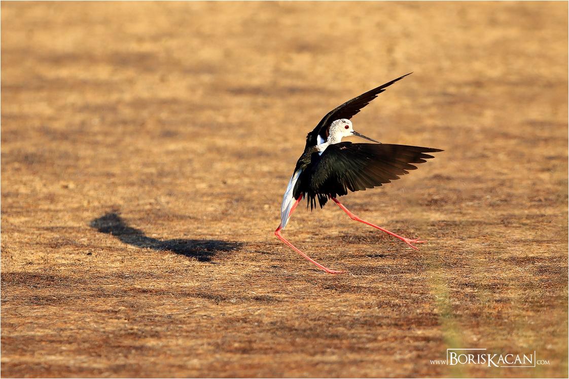 Slide Show Of Some Of My Bird Photos >> Boris Kacan Photography